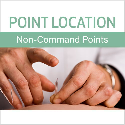 Point Location Series:  Non-Command Points