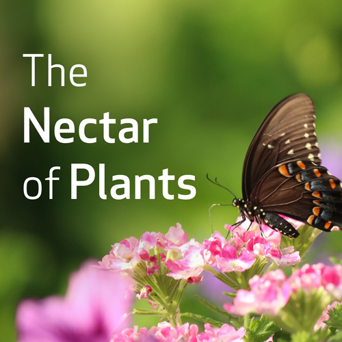 The Nectar of Plants: Essential Oils and Chinese Medicine Series